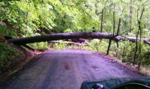 Tree down on Kinchloe