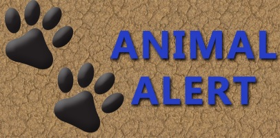 Animal Alert 2