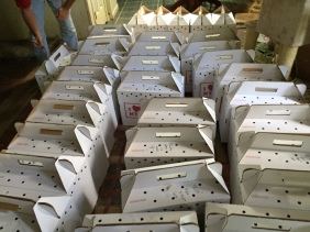 Cats and kittens in carriers awaiting transport to the shelter