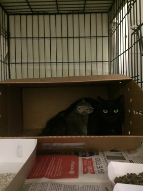 Adult cat with kitten still in box at the shelter