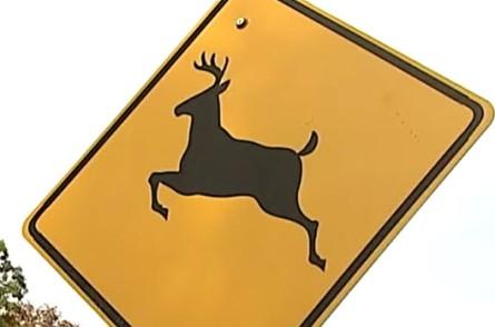 Deer 1 (002)